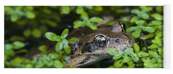 Yoga Mat featuring the photograph A Frog's Lawn by Robert Potts