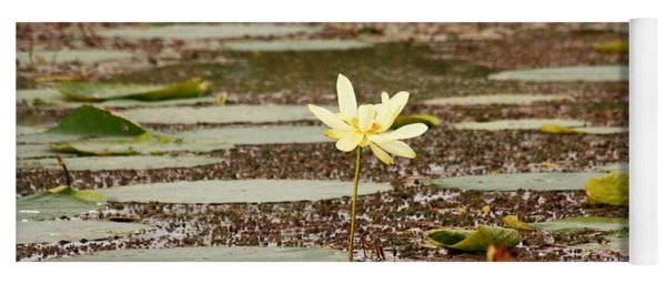 A Lone Water Lily Yoga Mat