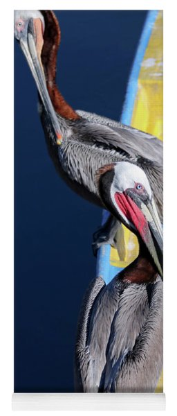 A Pair Of Brown Pelicans On A Blue And Yellow Rowboat Yoga Mat