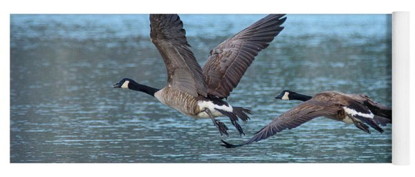 A Pair Of Canada Geese Yoga Mat