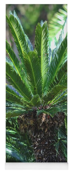 Yoga Mat featuring the photograph A Shady Palm Tree by Raphael Lopez