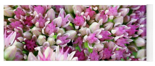 Yoga Mat featuring the photograph Abstract Sedum by Christina Rollo