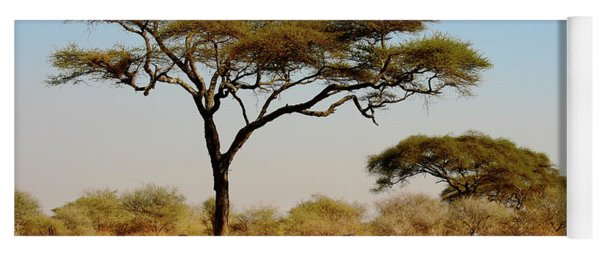 Acacia Tree And Zebras Yoga Mat
