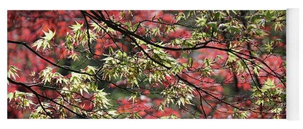 Acer Leaves In Spring Yoga Mat