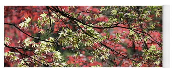 Acer Leaves In Spring Yoga Mat