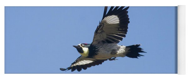 Acorn Woodpecker Yoga Mat