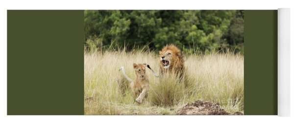 Adult Lion And Cub In The Masai Mara Yoga Mat