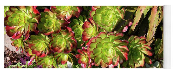 Aeonium Cyclops And Aloe Vaombe  Yoga Mat