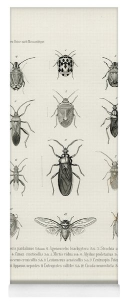 African Bugs And Insects Yoga Mat