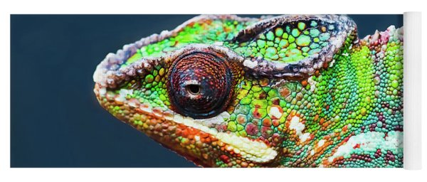 Yoga Mat featuring the photograph African Chameleon by Richard Goldman