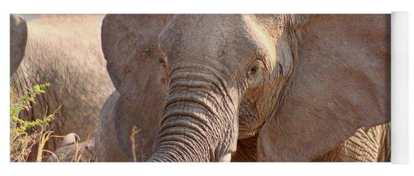 African Elephant   Yoga Mat