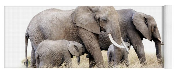 African Elephant Group Isolated Yoga Mat