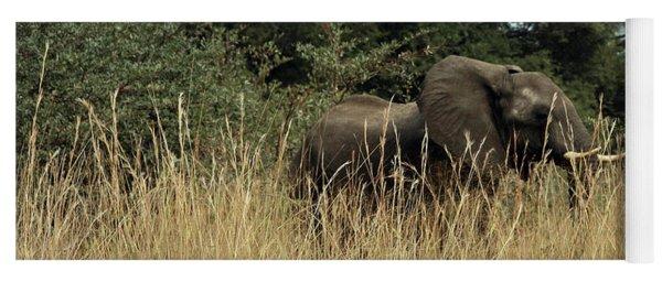 African Elephant In Tall Grass Yoga Mat