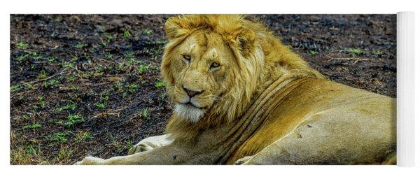 African Lion   Yoga Mat