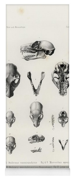 African Mammal Skulls Yoga Mat