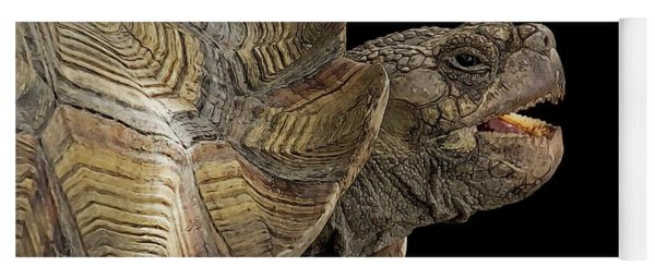 African Spurred Tortoise Yoga Mat