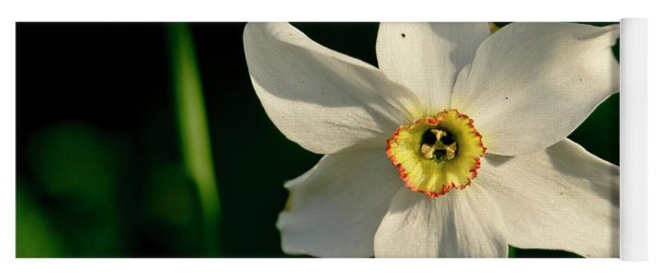 Afternoon Of Narcissus Poeticus. Yoga Mat