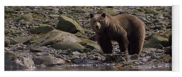 Alaskan Brown Bear Dining On Mollusks Yoga Mat