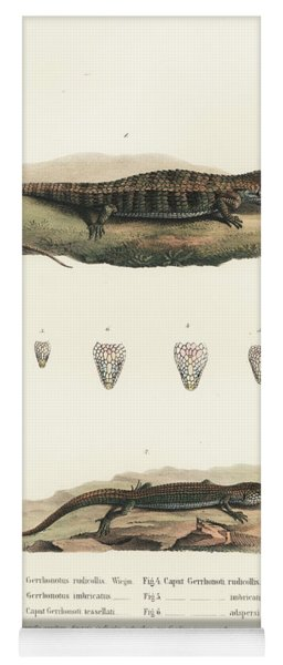 Alligator Lizards From Mexico Yoga Mat