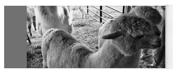 Alpaca Meeting  Yoga Mat