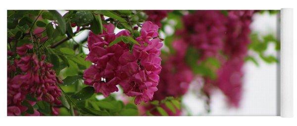 Amaranth Pink Flowering Locust Tree In Spring Rain Yoga Mat