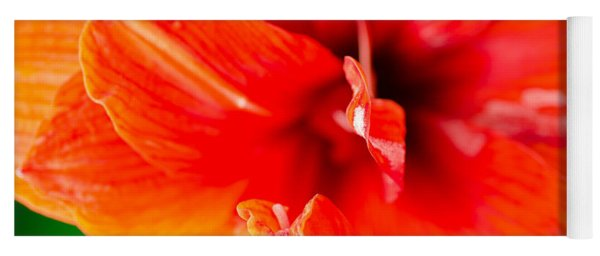 Amaryllis Orange Red Amaryllis Flower On Green Background Yoga Mat