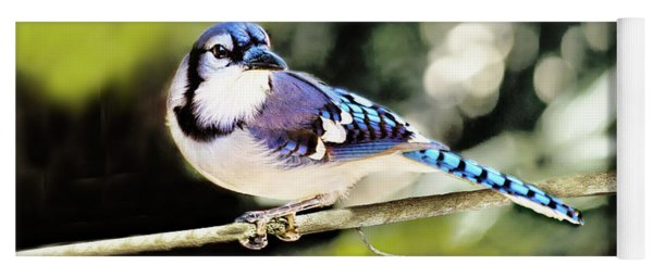 American Blue Jay On Alert Yoga Mat