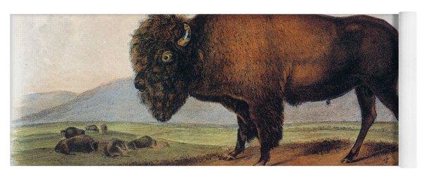 American Buffalo, 1846 Yoga Mat