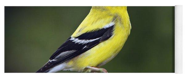 American Golden Finch Yoga Mat