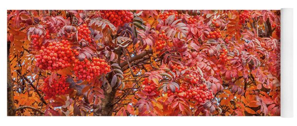 American Mountain Ash In Autumn Yoga Mat