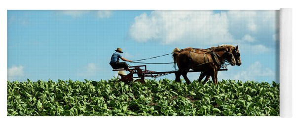 Amish Farmer With Horses In Tobacco Field Yoga Mat