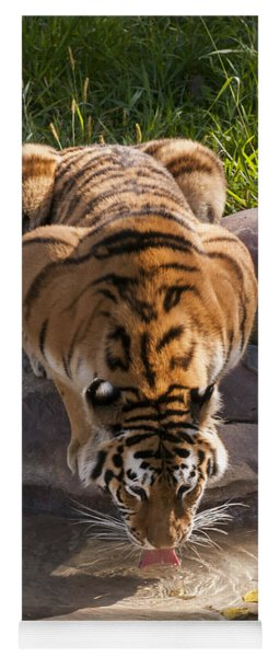 Amur Tiger Drinking Yoga Mat