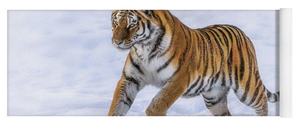 Yoga Mat featuring the photograph Amur Tiger Running In Snow by Rikk Flohr