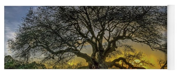 Ancient Live Oak Tree Yoga Mat