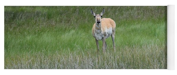 Prong Horned Antelope Lake John Swa Co Yoga Mat