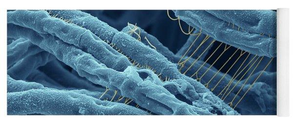 Anthrax Bacteria Sem Yoga Mat