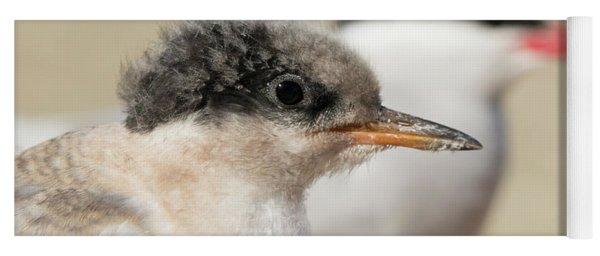 Arctic Tern Chick With Parent - Scotland Yoga Mat