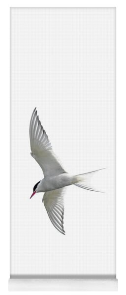 Arctic Tern Flying In Mist Yoga Mat