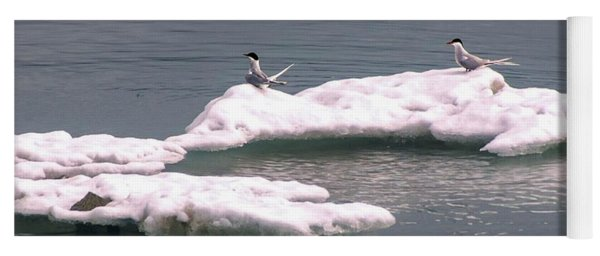 Arctic Terns On A Bergy Bit Yoga Mat
