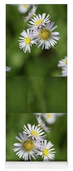 Fleabane, Erigeron Pulchellus - Yoga Mat
