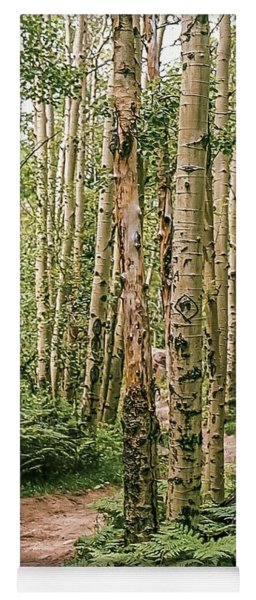 Aspen Grove Rocky Mountain National Park Yoga Mat