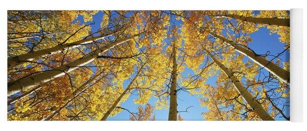 Aspen Tree Canopy 2 Yoga Mat