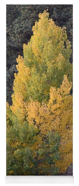 Aspen Tree Fall Colors Co Yoga Mat
