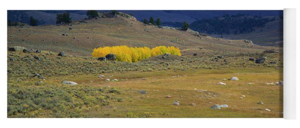 Aspens Ablaze In Yellowstone Yoga Mat