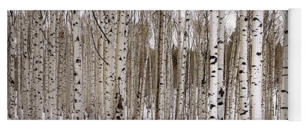 Aspens In Winter Panorama - Colorado Yoga Mat