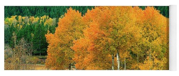 Aspens Populus Tremuloides Fall Color Grand Tetons National Park Wyoming Yoga Mat
