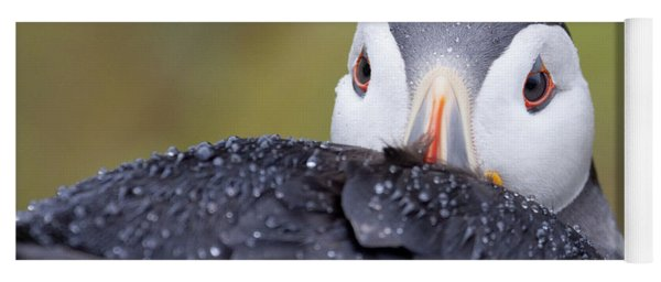 Atlantic Puffin With Rain Drops Yoga Mat