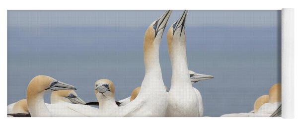 Australasian Gannets Courting Yoga Mat