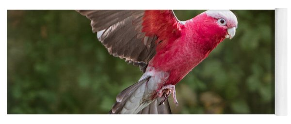Yoga Mat featuring the photograph Australian Galah Parrot In Flight by Patti Deters