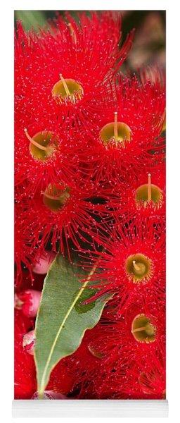 Australian Red Eucalyptus Flowers Yoga Mat